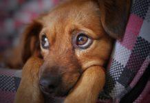 Cachorro - Jornal bom dia