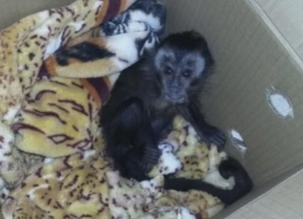 Macaco - Jornal bom dia